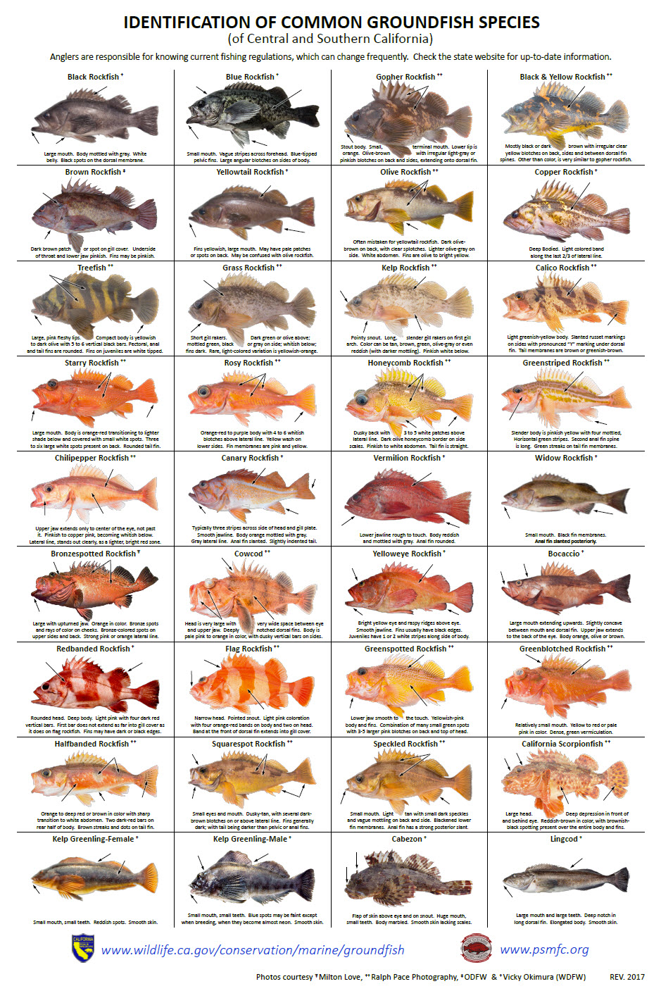 Rockfish Identification - Common Groundfish Species of Central and Southern California